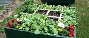 Divide de esta forma tu jardinera para plantar varias hortalizas en un mismo espacio