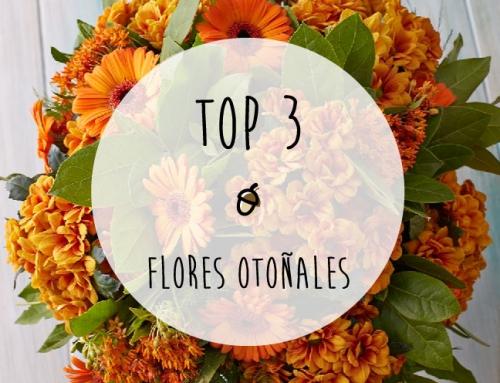 Top 3 de flores perfectas para otoño