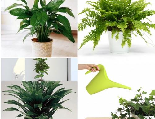 Las 10 plantas purificadoras del aire