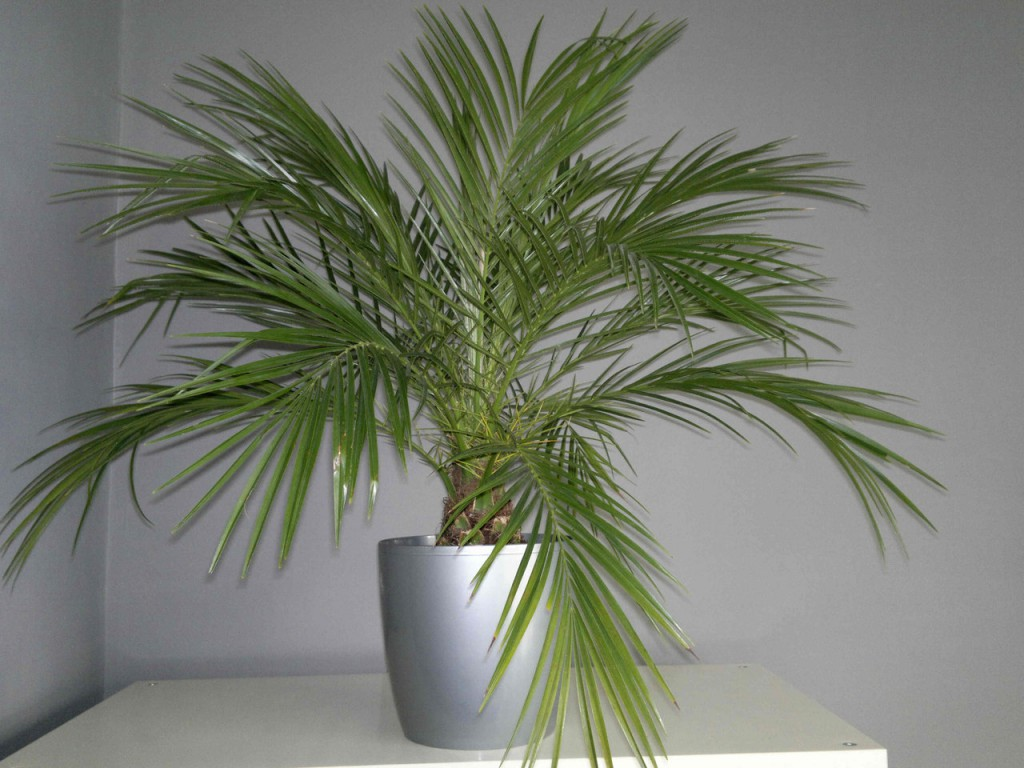plantas purificadoras