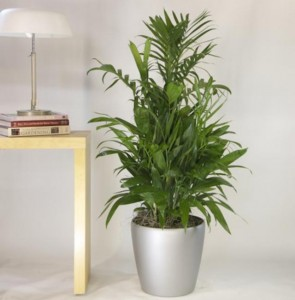 palmera de bambu