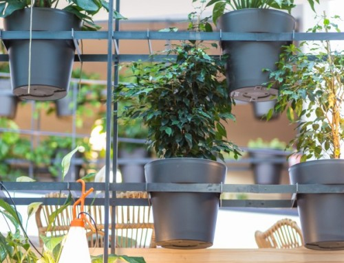 Un gran proyecto: Typeform, una oficina saludable gracias a GREEN OFFICE de flors & GO! (y a las plantas, claro)