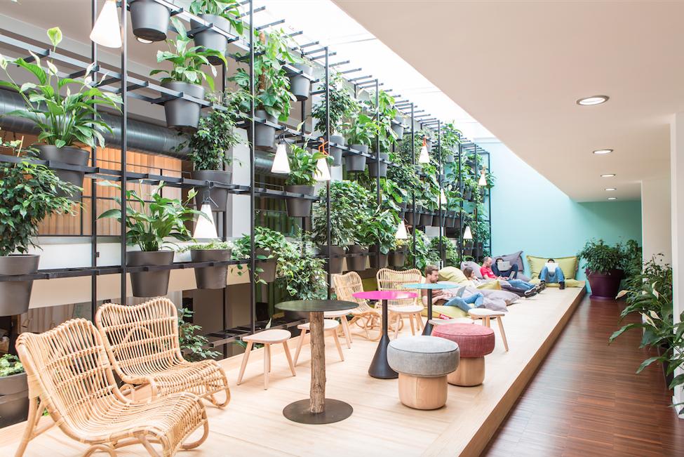 Un gran proyecto typeform una oficina saludable gracias - Plantas oficina ...