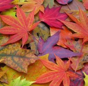 decoracion-halloween-hojas-secas
