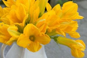 flores-de-calabaza