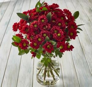 10-crisantemos-rojos-500x473