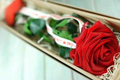 flores para San Jordi