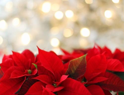 Ideas para decorar tu hogar con la flor de Pascua de Navidad