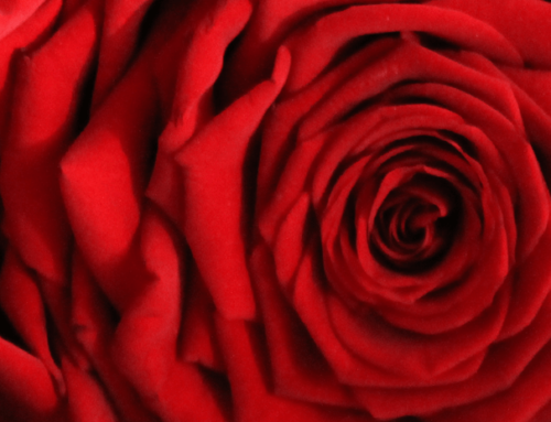LA ROSA RED NAOMI