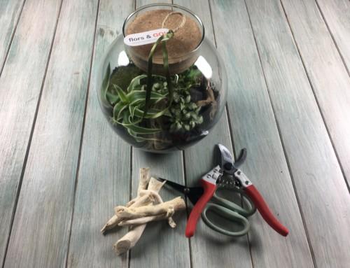 Mini Terrarios de interior: Cuidados del terrario