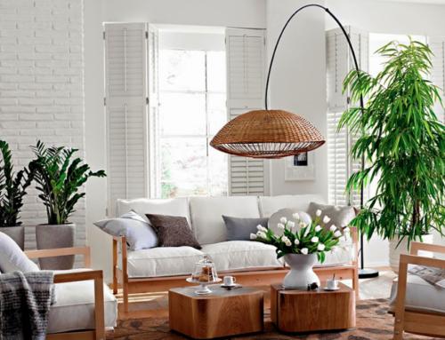 Dónde colocar tus plantas y flores según el Feng Shui